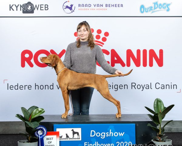 BEST_OF_BREED_238_LR_DOGSHOW_EINDHOVEN_2020_KYNOWEB_KY3_1992_20200208_13_43_17